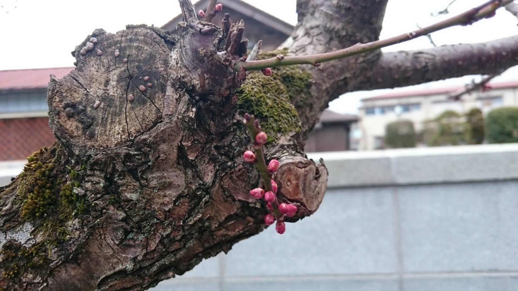 梅まつり〜オープン2周年記念〜